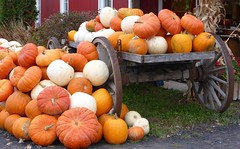 Pick & Treat... (anng48) Tags: canada fall automne quebec pumpkins pumpkinpatch qc citrouiles