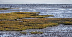 PA010067-Edit-2.jpg (Phil Kinsman (Olwebhound)) Tags: autumn mountains colour fall st river lawrence quebec lowtide mudflat wetland placestags