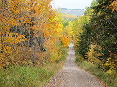 Tower Road near Hovland (zrim) Tags: autumn minnesota fallcolors hovland 2014