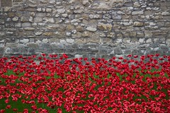 Poppies in the Moat (Ania Mendrek) Tags: city november flowers red green london tower beautiful weather towerbridge ceramic memorial war remember colours weekend walk poppies remembrance moat centenary londonist sigma18200mmf3563dcos poppiesinthemoat