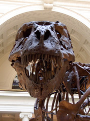 "Tyrannosaurus Rex looking right at you • <a style=""font-size:0.8em;"" href=""http://www.flickr.com/photos/34843984@N07/15516402966/"" target=""_blank"">View on Flickr</a>"
