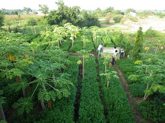 IMGP2386 (terrehum) Tags: formation togo ferme 2014 arej cinkass agrocologie cd2a jacquesnametougli