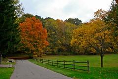 Autumn In Ohio (chrishowardphotography.com) Tags: autumncolors autumntrees beautifulautumn autumninohio gorgeousautumn scenicautumn