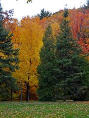 L'automne sous la pluie - Fall under the rain (Jacques Trempe 2,270K hits - Merci-Thanks) Tags: park autumn fall leave rain automne quebec pluie plage parc jacquescartier feuille stefoy