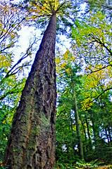 Trees_HDR_glitch_2014_ Melissa Donaghue-4042 (daisyvisionxxx) Tags: park november blue autumn trees sky tree fall oregon portland pentax bluesky portlandoregon glitch hdr forestpark washingtonpark 2014 pentaxk50 1182014 melissadonaghue