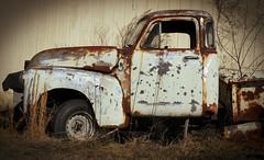 cab (hutchphotography2020) Tags: field weeds nikon rust automotive corrosion chippedpaint chevytruck fieldchippedpaint