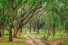 Loneliness (Picsnapr) Tags: park trees boy india man green self alone sitting mud path bangalore busy lonely muddy cubbonpark