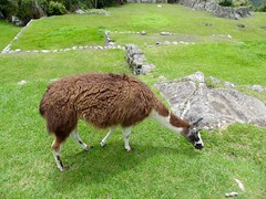 Machu Picchu-188