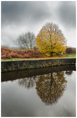 Washlands (SFB579 Namaste) Tags: autumn trees winter storm fall water leaves rain clouds dark landscape gold golden moody seasons bare yorkshire wakefield ricoh aireandcaldercanal