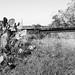 Missouri-Pacific Railway Trestle over Salt Bayou 1410251319bw