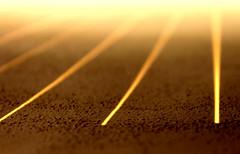 Fili di raggi dorati, ordinati (Veronicamente) Tags: morning sun macro muro soleil ray lumire sunday natura ombre sole morgen luce dimanche simmetria raggi matin domenica geometria dorato ordine parallelo
