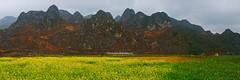 G7619-22.0312.Đồng Văn.Hà Giang. (hoanglongphoto) Tags: landscape nature spring sky mountain flower panorama color colorimage vietnam hàgiang đồngvăn phongcảnh thiênnhiên mùaxuân bầutrời núi hoa hoacải hoacảivàng màu ảnhmàu canon canoneos5dmarkii carlzeisst1235mm asia asian outdoor châuá đôngnamá sierra flank rockmountain dãynúi sườnnúi núiđá mountaintop đỉnhnúi dale thunglũng field cánhđồng cánhđồnghoacải cánhđồnghoa northvietnam northeastvietnam đôngbắc vietnamlandscape hagianglandscape mountainlandscape mountainouslandscape vietnammountainouslandscape phongcảnhviệtnam phongcảnhvùngcao phongcảnhhàgiang phongcảnhđồngvăn thịtrấnđồngvăn