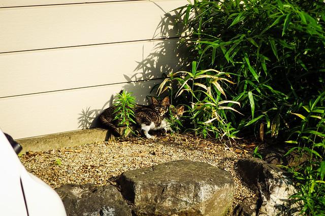 Today's Cat@2015-06-15