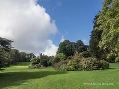 Clyne Gardens 2016 09 30 #5 (Gareth Lovering Photography 3,000,594 views.) Tags: clyne gardens botanical swansea wales flowers trees shrubs park olympus stylus1s garethloveringphotography