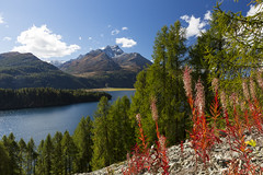 Herbst im Engadin (Armin Mathis Fotografie) Tags: engadin oberengadin silsersee see bergsee herbst pizdalamargna halbinsel chast lrchen