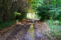 Grovely Woods (heathernewman) Tags: october footpath outdoors nature broadleaf reflection colourful autumn trees greatwishford southwest greatridge wilton wiltshire woodland grovelywoods