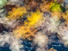 Memories In The Mind... (Beppe Cavalleri - www.beppecavalleri.com) Tags: bokeh leica2514 wwwbeppecavallericom winter nature beppecavalleri olympuspenf bw minimal autumn leaf colors seasons