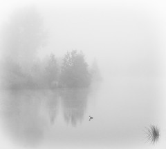 Serenity (nokkie1) Tags: eindhoven holland netherlands fog lake serene trees reflection cold bird grass black white monochrome