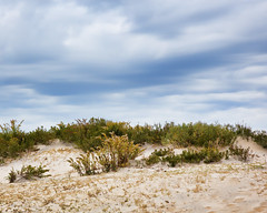 Assateague Dunes by Fran Saunders (AccessDNR) Tags: 2016 photocontest fall autumn scenery sceniclandscape dunes beach assateague