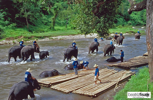 52 Baño de elefantes en Chiang Mai