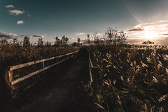 towards the lighthouse (mark letheren photography) Tags: wetlands newportwetlands vscofilm outdoors