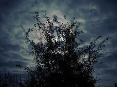 2016-10-14_21-18-29 (torstenbehrens) Tags: olympus ep5 lumix g 20f17 ii digital camera nacht licht busch himmel mond