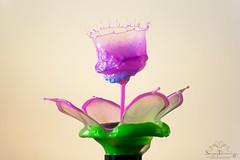 DSC_7268 (tolmachevsergey) Tags: water drop art macro splash liquid liquidart highspeedphotography tropfen waterdpop flower