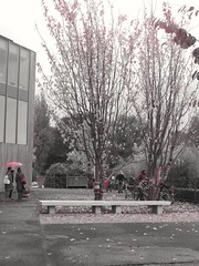 2016-10-21_07-25-19 (emielelabes) Tags: trees red