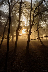Morning mist (Jantje1972) Tags: mist sunrise trees forest bomen nederland posbank zonsopkomst