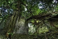 The Call of the One (Rickydavid) Tags: villaada roma rome degrado decay nature jungle giungla abbandono abandoned ruin rudere