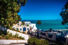 DSC00152 (medlabiadh) Tags: nature architectue tunisia sidi bou said summer