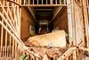 IMG_8475 (caastro) Tags: mariana minasgerais desastre barragemdofundão bentorodrigues paracatu gesteira samarco barralonga