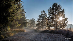 Light (Luigi Alesi) Tags: 201612dicembre sanseverino italia italy marche macerata san severino luce light alberi trees strada way road paesaggio landscape scenery sole sun raggi rays nikon d750 raw
