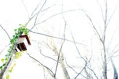La pajarera (Ana López Heredia) Tags: canoneos600d canon eos 600d tamron18270mmf3563diiivcpzd tamron experimentos montseny hayedo pajarera hiedra árboles árbol forest analópezheredia santafe barcelona