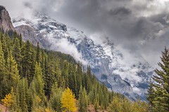TRANSITIONS (Sandy Stewart) Tags: rockymountains canadianrockymountains moodyscenes snow snowpeakedmountains mountainlandscapes sandystewartlandscapes wild beautiful trees autumn fall