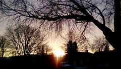 Trees at sunrise - TMT. (Maenette1) Tags: trees sunrise morning sky menominee uppermichigan treemendoustuesday flicker365