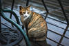 貓 (CLin4086) Tags: 貓 cat 台灣 taiwan canon 760d 50mm f18 基隆 十分 車站 animal