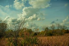 Somber Afternoon (thefisch1) Tags: cumulus cirrus pasture pond tree prairie sky cloud kansas cottonwood