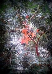 Autunno (dona(bluesea)) Tags: albero tree foglie leaves verde green rosso red