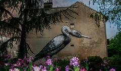 (C-47) Tags: street art city architecture artistic artistique paris amateur flowers painting