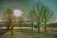 Winter morning sun (rainertessmann) Tags: landscape talviaamuna bui sng ma ng k sabah zimn rno    winterochtend wintermorgen matin dhiver  mattina dinverno maana de invierno   winter morning     ekuseni ebusika vetur morgun vintermorgen rhein rhine   rhin rijn   outdoor