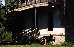 Arriondas, Asturias, Espaa. House with ghosts. (Caty V. mazarias antoranz) Tags: arriondas asturias principadodeasturias spain espaa concejodeparres oviedo rosella descensodelsella canoas alquilerdecanoas housewithghosts casaconfantasmas