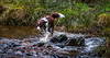Making A Splash!! (SpookyGhost1) Tags: izzy littleborough rochdale dog wet water stream hollinworthlake bordercolliepuppy 11months canon70d fun bitch