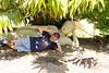 _J9A6790 (Noel Roberts) Tags: birds maleny aviary birdlife birdie birdwatching birdcage birdphotography featheredfriends bird worldcuteflightfeatherbirdswildlifeparrotafrican grey parrotgolden chinese pheasantpheasantcolourfulbeautifulmaleny botanic gardensbotanicgardenscockatooblack cockatooredtailedindian ringneck parrot budgie