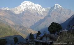 P1100968 Annapurna S and Himchuli from trail ( now a 4WD road at Landruk (ks_bluechip) Tags: nepal trek dec2016 annapurna abc mbc landruk tolga pitamdeorali pothana