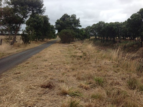 Bellarine Rail Trail next to railway track