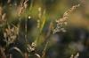 Sonne nach Regentagen ist nicht nur nur ein Kalenderspruch, sage ich zur Wiese und versuche, ein bisschen Glitzer abzukriegen. (Manuela Salzinger) Tags: winter blume flower wiese meadow