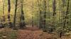 Golden Autumn (Netsrak (on/off)) Tags: autumn herbst tree trees baum bäume weg path yellow gelb blatt blätter leaf leaves