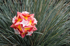 Convolvulus (_Ekaterina) Tags: red grass yellow paper origami paperfolding modularorigami kusudama unitorigami ekaterinalukasheva