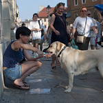 "Giving dog a drink • <a style=""font-size:0.8em;"" href=""http://www.flickr.com/photos/28211982@N07/20873746332/"" target=""_blank"">View on Flickr</a>"